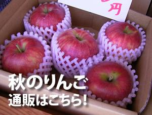 秋のりんごご予約開始しました