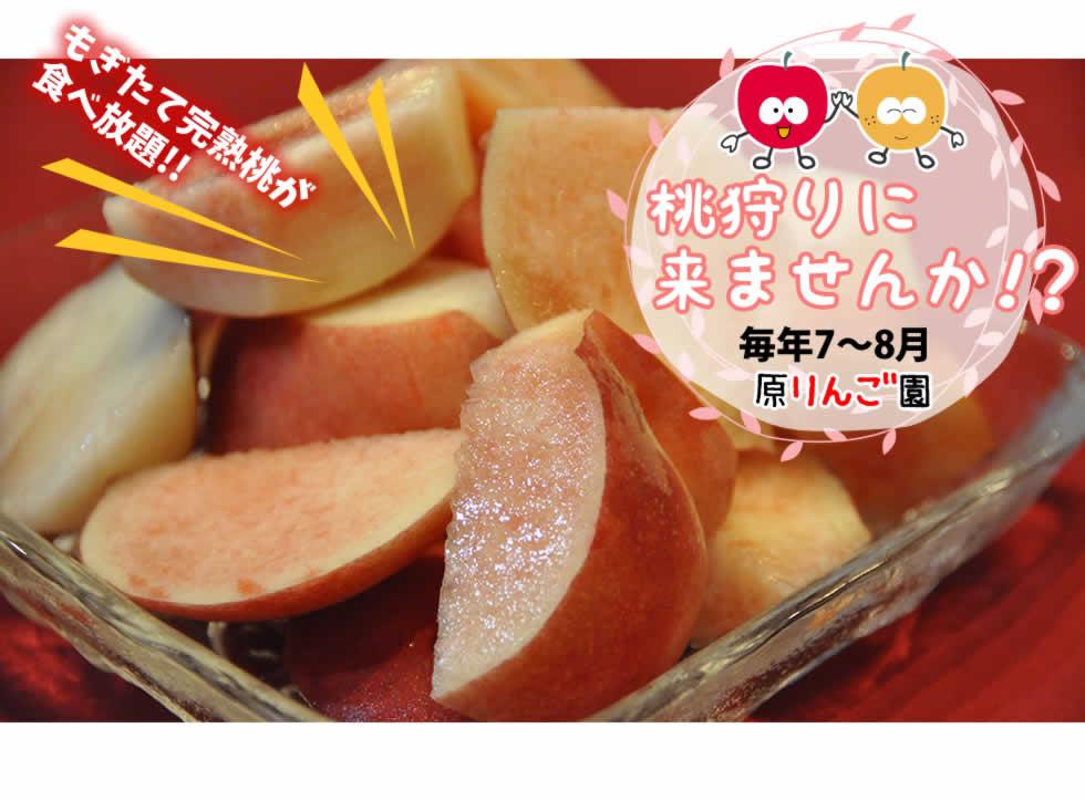 もぎたて完熟桃が 食べ放題!! 桃狩りに 来ませんか!?