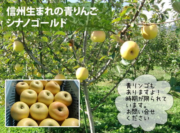 原りんご園のシナノゴールド