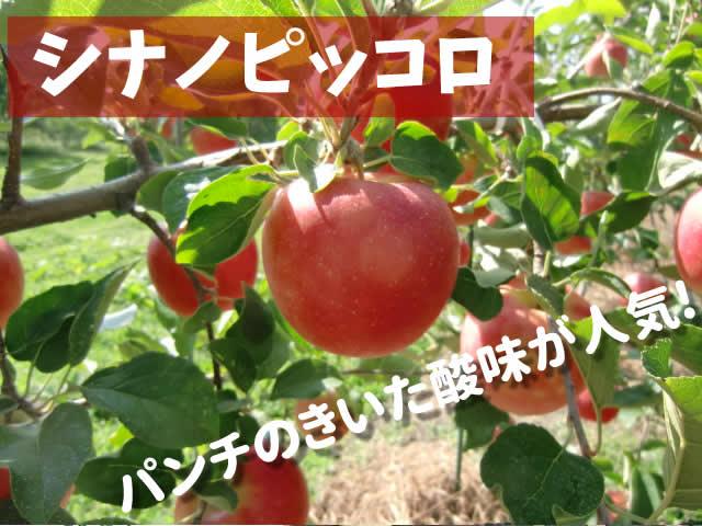 原りんご園のシナノピッコロ