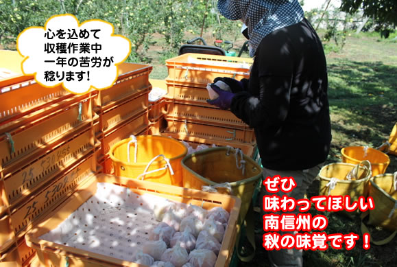 原りんご園旬のフルーツ詰め合わせ